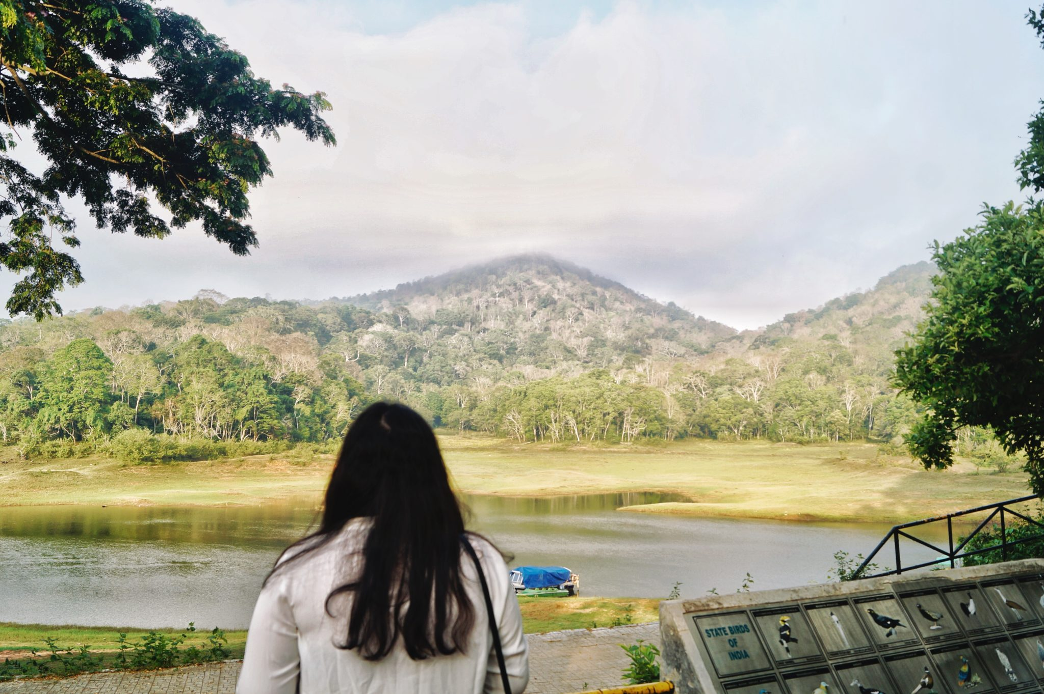 Periyar National Park : Must Visit Attraction in Thekkady
